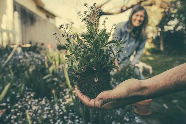 Les avantages de la plantation de jardins potagers